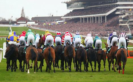A view from behind the jockeys of the first hurdle at the start